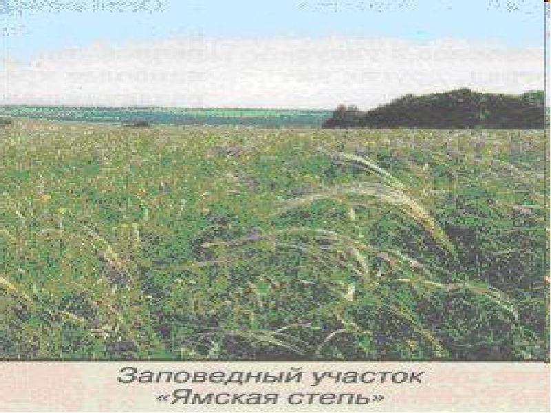Особо охраняемые территории Белгородской области, слайд 12