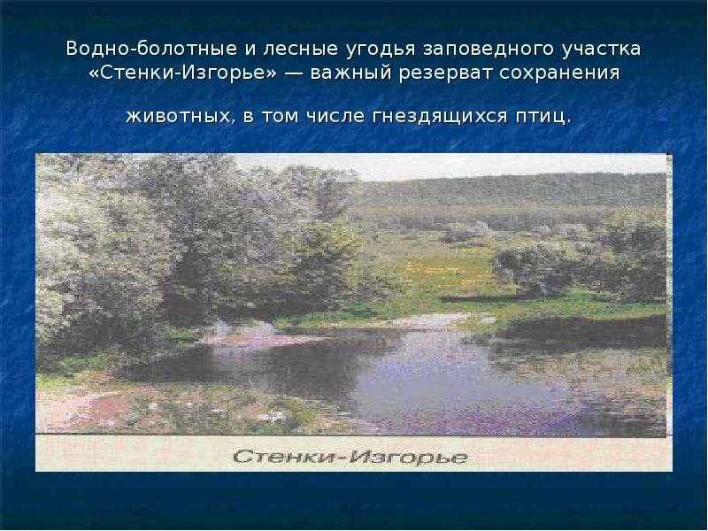 Водно-болотные и лесные угодья заповедного участка «Стенки-Изгорье» — важный резерват сохранения жив