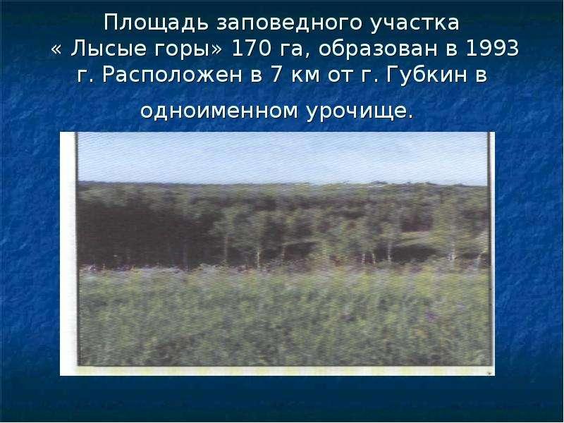 Площадь заповедного участка « Лысые горы» 170 га, образован в 1993 г. Расположен в 7 км от г. Губкин