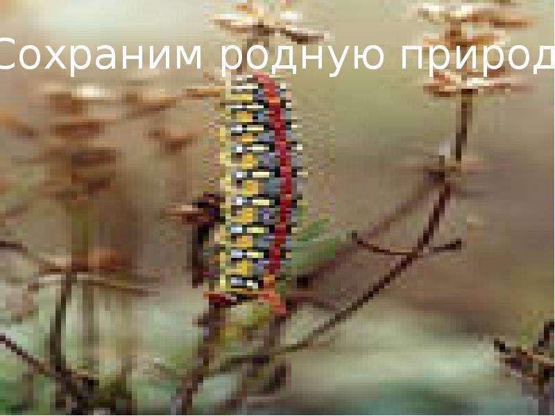 Особо охраняемые территории Белгородской области, слайд 28
