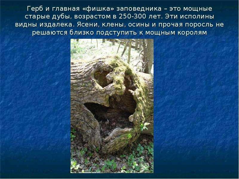 Герб и главная «фишка» заповедника – это мощные старые дубы, возрастом в 250-300 лет. Эти исполины в
