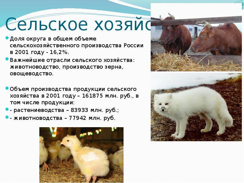 Сельское хозяйство Доля округа в общем объеме сельскохозяйственного производства России в 2001 году