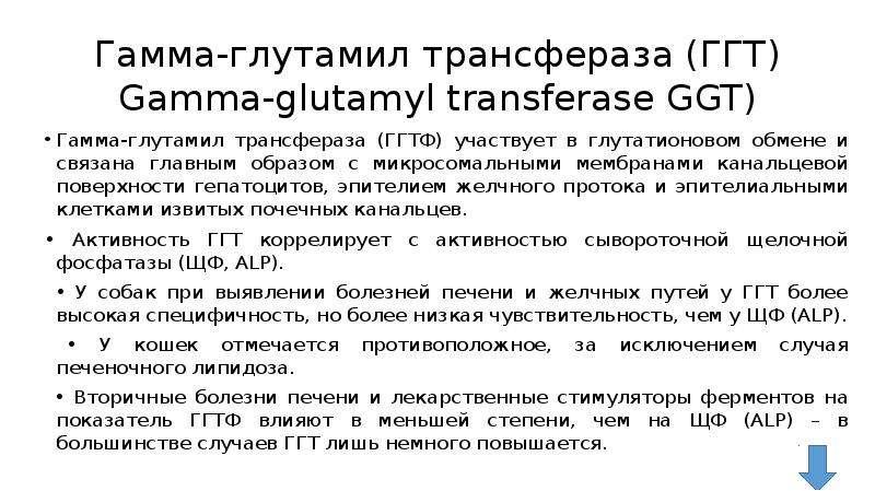 Гамма-глутамил трансфераза (ГГТ) Gamma-glutamyl transferase GGT) Гамма-глутамил трансфераза (ГГТФ) у