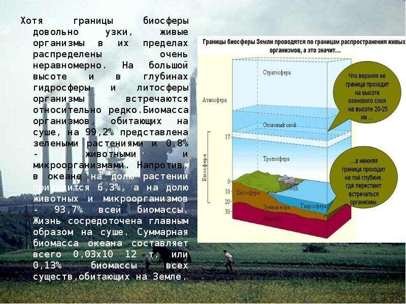 Хотя границы биосферы довольно узки, живые организмы в их пределах распределены очень неравномерно.