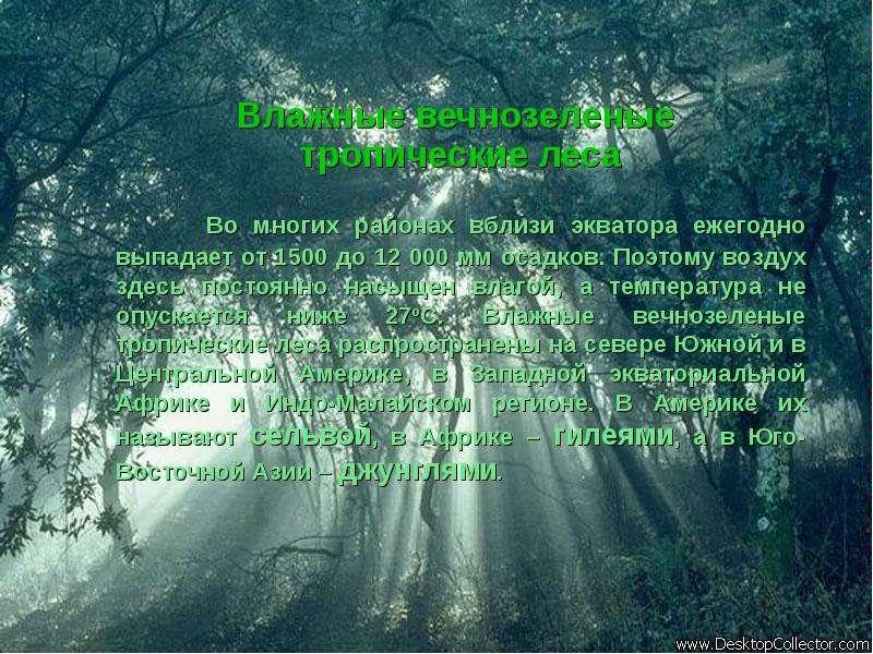 Влажные вечнозеленые тропические леса Во многих районах вблизи экватора ежегодно выпадает от 1500 до