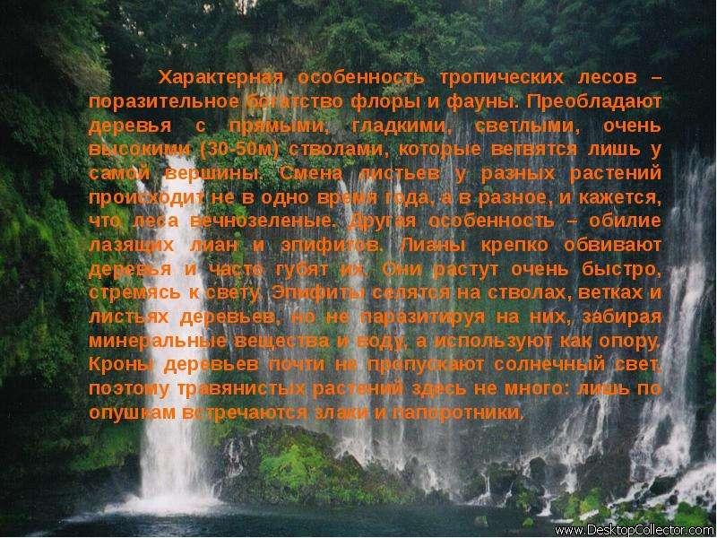 Характерная особенность тропических лесов – поразительное богатство флоры и фауны. Преобладают дерев