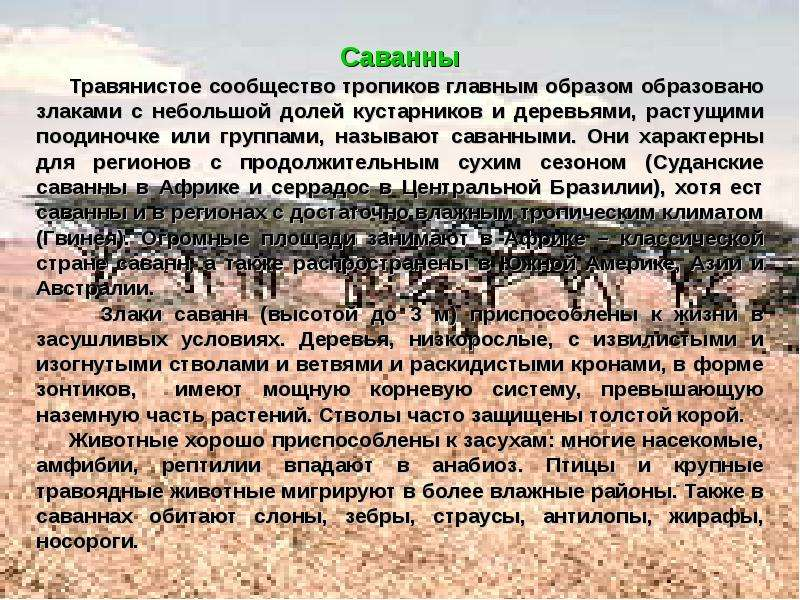 Саванны Травянистое сообщество тропиков главным образом образовано злаками с небольшой долей кустарн