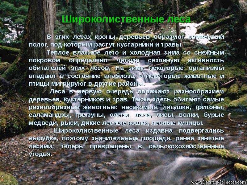 Широколиственные леса В этих лесах кроны деревьев образуют сомкнутый полог, под которым растут куста