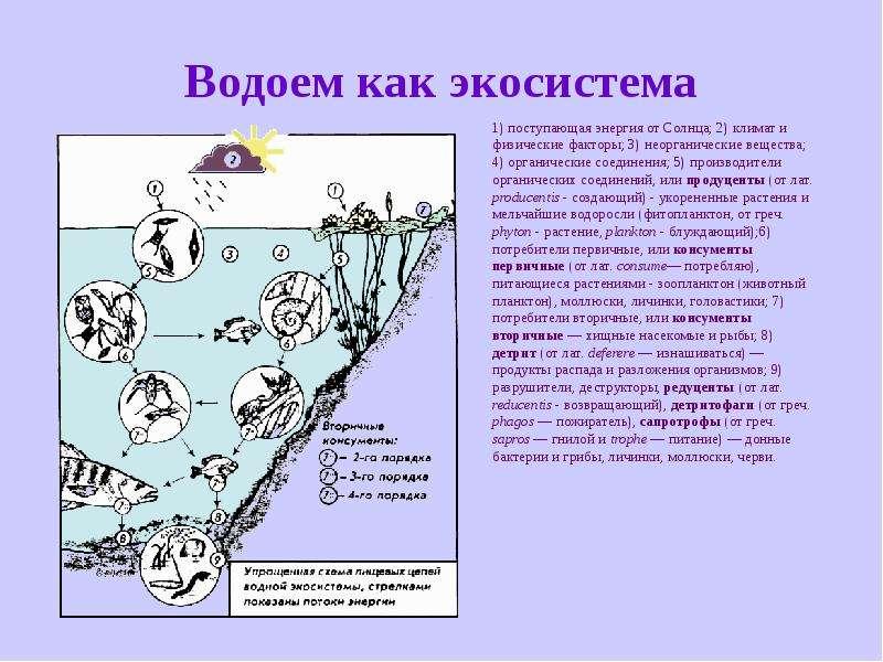 Водоем как экосистема 1) поступающая энергия от Солнца; 2) климат и физические факторы; 3) неорганич