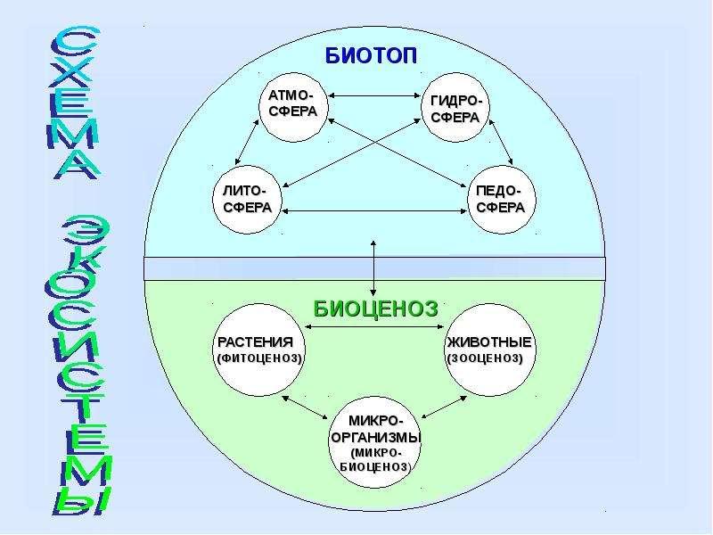 Экосистема. Виды взаимодействия, слайд 5