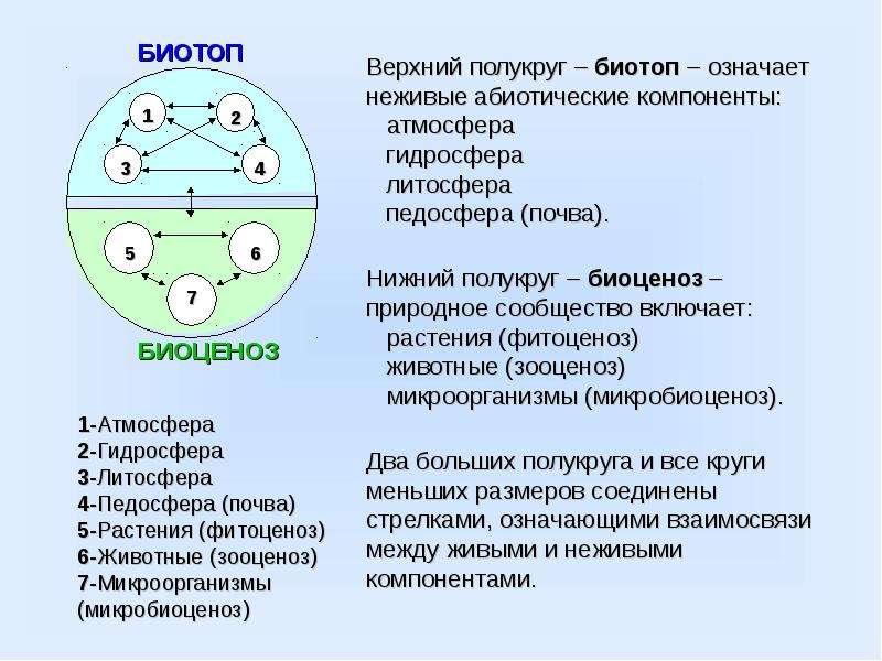 1-Атмосфера 2-Гидросфера 3-Литосфера 4-Педосфера (почва) 5-Растения (фитоценоз) 6-Животные (зооценоз