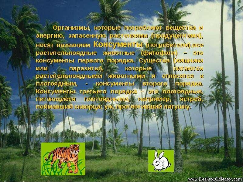 Организмы, которые потребляют вещества и энергию, запасенную растениями (продуцентами), носят назван