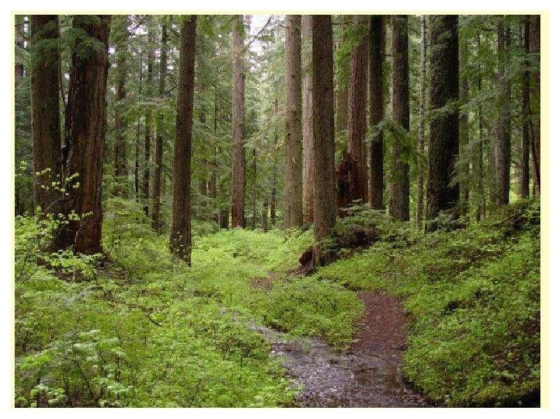 Особенности главных рубок в лесах разного состава и назначения, слайд 19