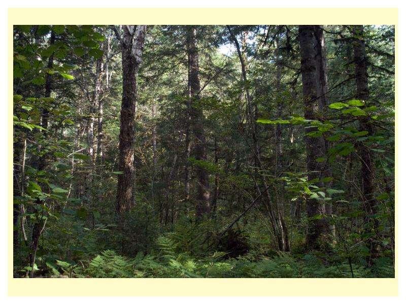 Особенности главных рубок в лесах разного состава и назначения, слайд 8