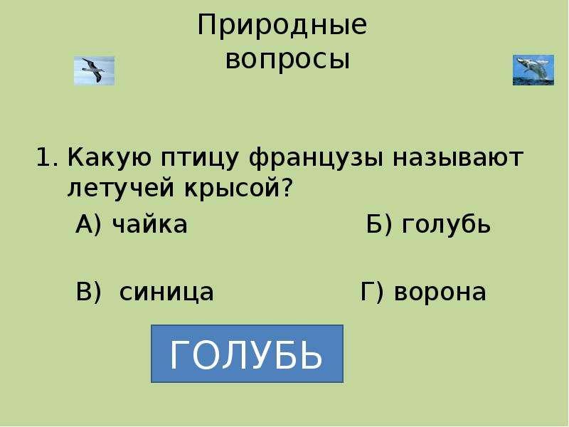 Природные вопросы Какую птицу французы называют летучей крысой? А) чайка Б) голубь В) синица Г) воро